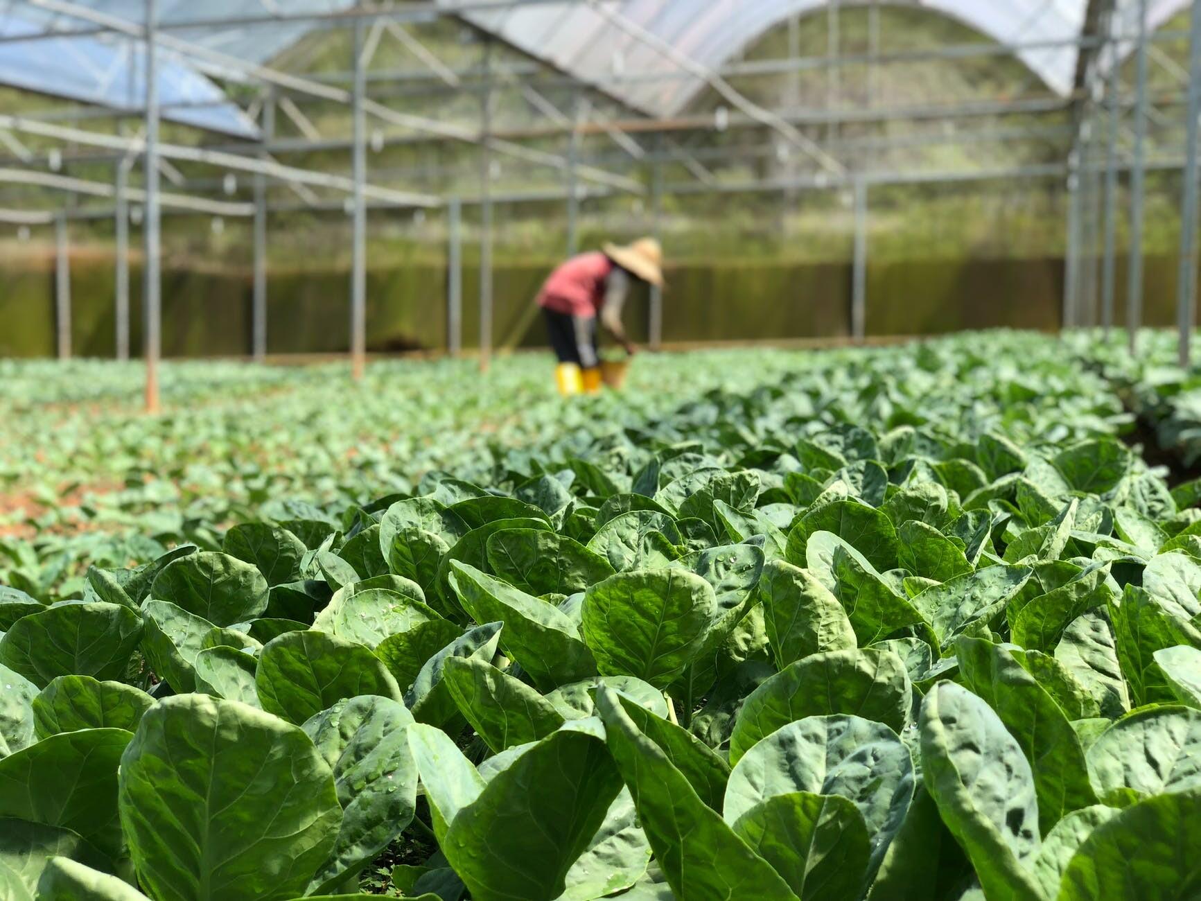 Agrofibra_Mexico_alt