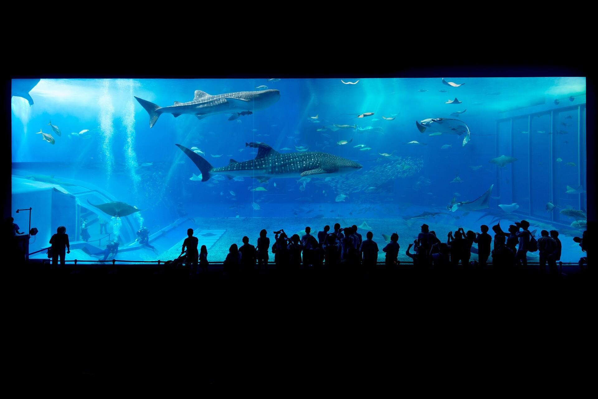 nuevo-acuario-de-Mazatlán-alt